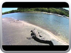 Costa Rica Crocodile with Phantom DJI 2 Vision ...
